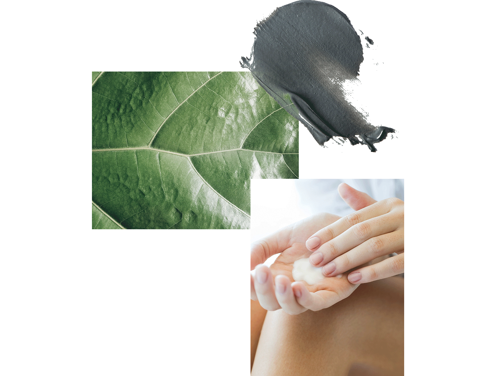 leaf-close-up-person-applying-cream